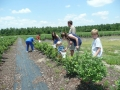 Blueberry Hill Farm
