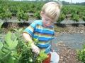 Blueberry Hill Farm
